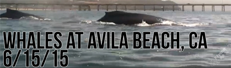 Avila Beach, Whales, Kayaking