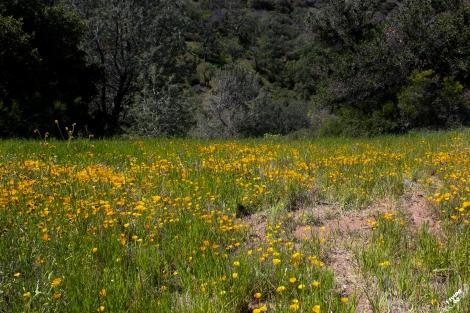 FigueroaWildflowers-1