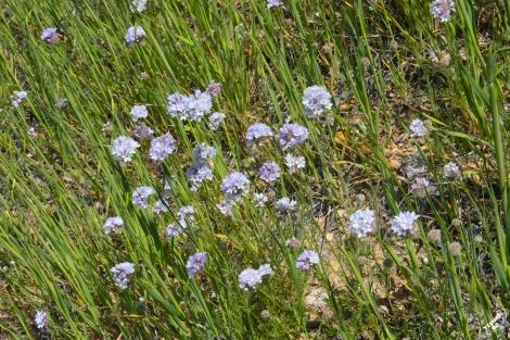 FigueroaWildflowers-13