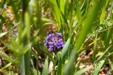 FigueroaWildflowers-6